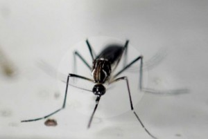 Zika-Virus-Disease
