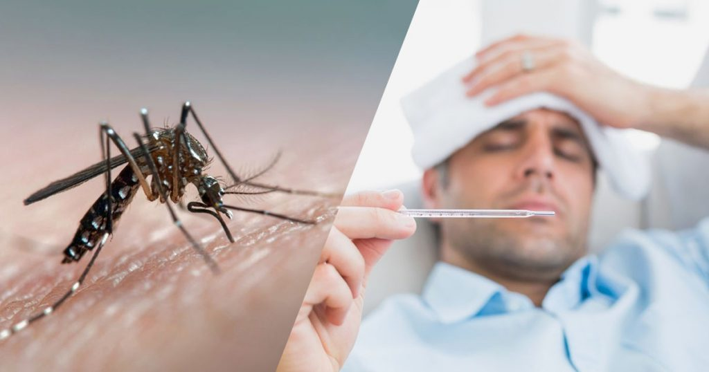 Dengue – Everything You Need To Know About It