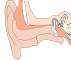 Ear infections in children (Otitis Media)