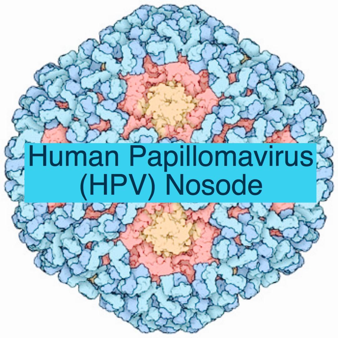 Human papillomavirus nosode Dictionar italiana-romana